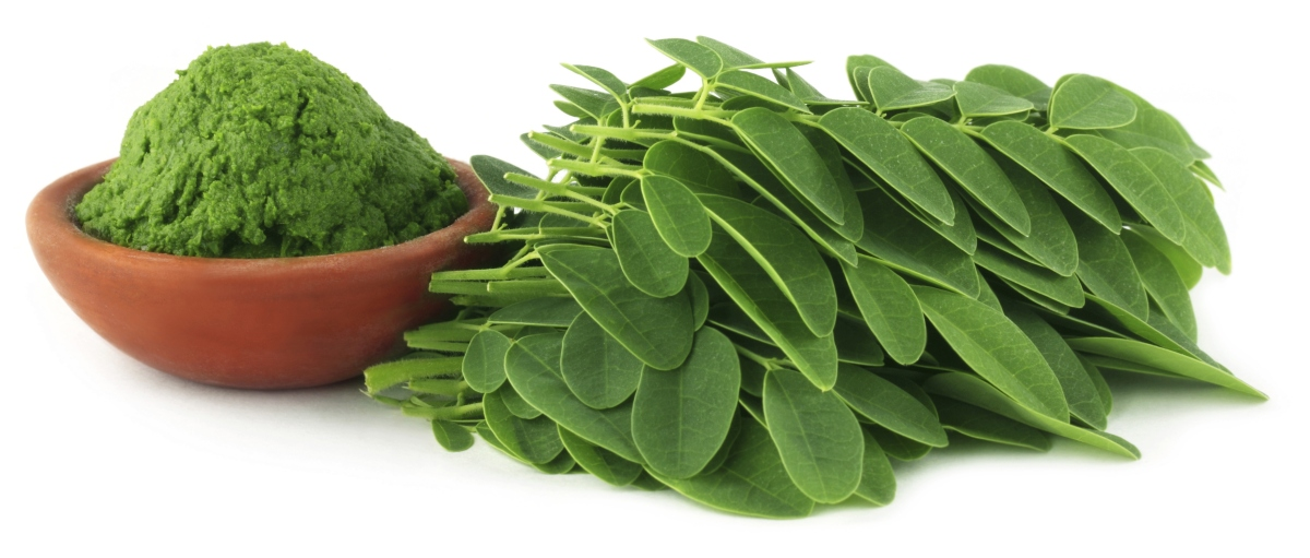 Why is Moringa so Important?