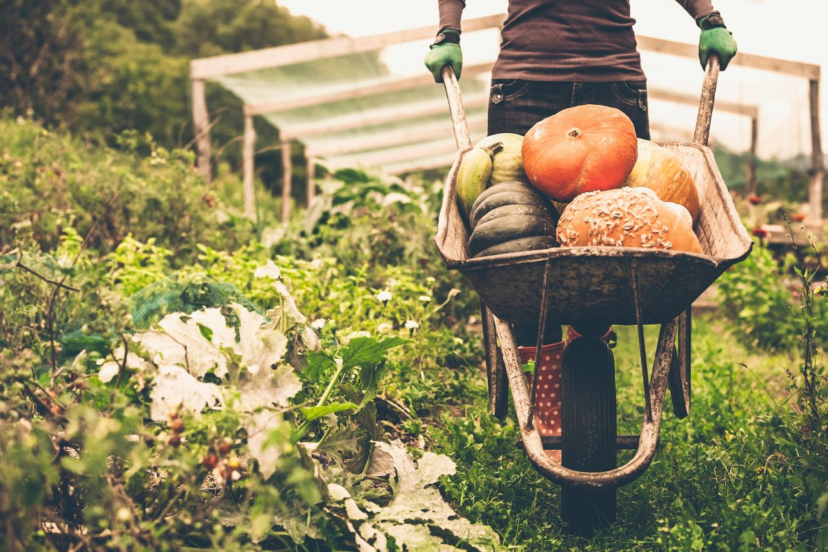 Everything You Need to Know About Eating Organic